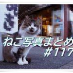 【ねこ 画像】ねこ写真まとめ Vol 117 ほっぺたの大きさが左右で違う猫。怖い顔でにらむ茶トラ。店先で愛想を振りまく猫。舌を出したまま眠ってしまった猫。