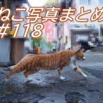【ねこ 画像】ねこ写真まとめ Vol 118 日向ぼっこで熟睡する三毛猫。体を伸ばして歩く茶トラ。港をうろうろして魚をもらう猫。倉庫の裏の猫たち。