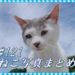 【ねこ 画像】ねこ写真まとめ Vol 121 分身の術にゃのだ。様子を見にきたキジトラ猫。極楽気分で昼寝の茶トラ。塀の上が気になるキジトラ。