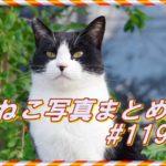 【ねこ 画像】ねこ写真まとめ Vol 119 日向ぼっこでまぶたが重いキジトラ猫。正面からこっちにやってくる猫。凛々しい表情のハチワレ猫。腰がひけてる猫。