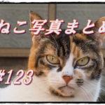 【ねこ 画像】ねこ写真まとめ Vol 123 メスだけどイケメンの三毛猫。去り際に振り返るキジトラ。絶叫じゃないよ、あくびです。寂しげな表情のシロクロ猫。