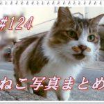 【ねこ 画像】ねこ写真まとめ Vol 124 ベンチの下から出てきた三毛猫。魚をもらってちょっとドヤ顔の茶トラ。波止場で座っている白猫。ジャイな黒猫とキジトラ。