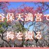 谷保天満宮で梅を撮りました。満開の梅園は撮りがいあり。駅から近いおすすめの撮影スポットです。
