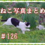 【ねこ 画像】ねこ写真まとめ Vol 126 目覚めたばかりのキジトラ。空を見上げる茶トラ。突然現れた白猫。飛ぶように走るハチワレさん。
