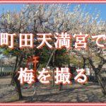 町田天満宮で梅を撮る。天気は良いが梅はピーク越え。ほとんど人がいない境内でゆっくり撮影しました。