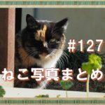 【ねこ 画像】ねこ写真まとめ Vol 127 枯草の上でまるくなっているサビ猫。ひそひそ話をしている二匹の猫。「ニヤッ」と笑う三毛猫。舌を出したポッコリお腹の黒猫。