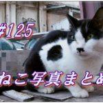 【ねこ 画像】ねこ写真まとめ Vol 125 びっくり顔の白黒猫。港を悠々と歩く猫。抜け道から出てきた茶トラ猫。体が丸いキジトラがにらむ。着席して食事を待つ茶トラ。