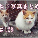 【ねこ 画像】ねこ写真まとめ Vol 128 夕暮れに仲間を待つ猫。何かの気配を感じた猫。二匹の猫がやってきた。目の前でゴロッと転がる猫。ねぐらへ帰る猫。
