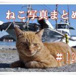 【ねこ 画像】ねこ写真まとめ Vol 129 夕日がまぶしい猫。警戒する猫たち。眠りながらストレッチする猫。近寄ってきた黒猫。用水路で見かけた猫。