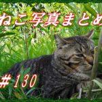 【ねこ 画像】ねこ写真まとめ Vol 130 緊急事態宣言下、梅雨そして蒸し暑い夏の撮影はどうするか。方向はおぼろげには決まりました。そして思い思いの猫さんたち。