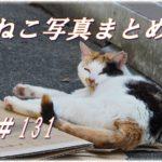 【ねこ 画像】ねこ写真まとめ Vol 131 警戒しながら近づく三毛猫。さっさと立ち去る白黒猫。マイベッドでのんびり過ごすキジトラ。見よ、これが猫背ストレッチだ!