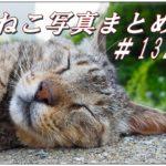 【ねこ 画像】ねこ写真まとめ Vol 132 ライオンのような寝顔のキジトラ猫。猫を撮るときはたいていズームレンズを使ってます。