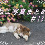 【ねこ 画像】ねこ写真まとめ Vol 133。オリンパス M.ZUIKO DIGITAL ED 12-100mm F4.0 IS PROで猫を撮ってみた。とてもシャープな高倍率ズームに感動。