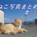 【ねこ 画像】ねこ写真まとめ Vol 134 通せんぼしてにらむ白猫。まぶしいけど起きない猫。目の前をゆっくり横切るボス猫。ご機嫌ななめの茶トラ猫。