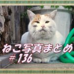 【ねこ 画像】ねこ写真まとめ Vol 136 気持ち良さそうに首をかく茶トラ猫。同時ににらむ二匹の猫。イケメンの三毛猫。一瞬、二本足で立ちあがったチビトラ。