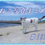 【ねこ 画像】ねこ写真まとめ Vol 137 ダンボール箱が好きな猫たち。おだんごフェイスの猫。それぞれのお昼寝タイムをすごす猫たち。慎重に歩く三毛猫。