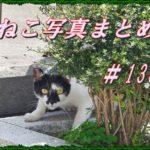 【ねこ 画像】ねこ写真まとめ Vol 138 シッポを立てて歩く三毛猫。草むらの中から見ているハチワレ。塀の上のキジトラ。アスファルトにほっぺたすりすりの白黒猫