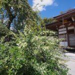 【OLYMPUS】オリンパス のマクロレンズ、M.ZUIKO DIGITAL ED 30mm F3.5 Macroと広角ズーム、M.ZUIKO DIGITAL ED 9-18mm F4.0-5.6で八王子、長福寺の萩の花を撮る。
